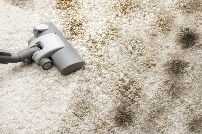Best Carpet Cleaner Solutions for Easy Cleaning