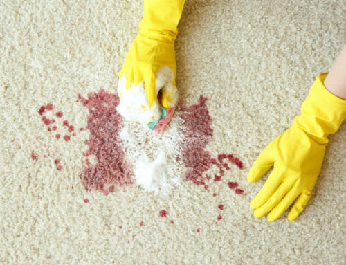 How to Get Blood Out of Carpets: The Sweat-Free Ways